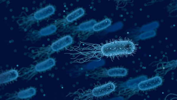 Researchers prove bacteria can avoid antibiotics by changing shape inside humans – ThePrint