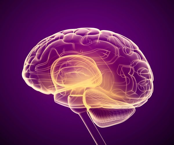 Tamping down stroke damage with a drug that protects brain cells – FierceBiotech